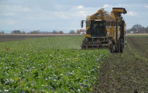 Pokaz uprawy gleby i zbioru buraka cukrowego w Skołoszowie